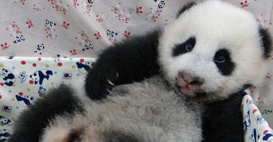 22.set.2013 - Filhote de panda descansa no zoológico de Taipei, em Taiwan, neste domingo (22). O recém-nascido é o primeiro panda nascido no país, gerado a partir de inseminação artificial
