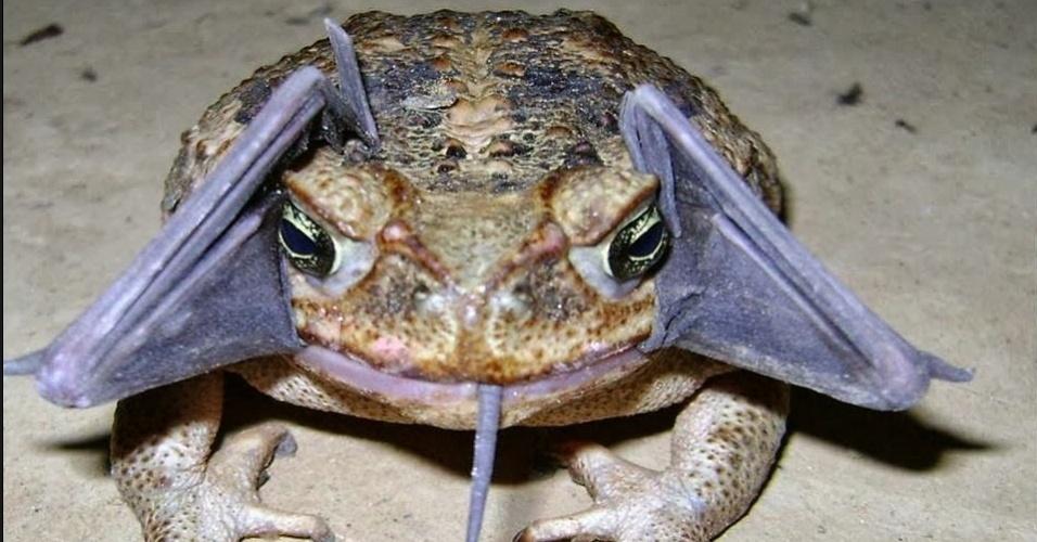 25.set.2013 - Um guarda conseguiu flagrar o exato momento em que um sapo-boi ou sapo cururu (Rhinella marina) abocanhou um morcego no Parque Nacional Amotape, na Amazônia peruana