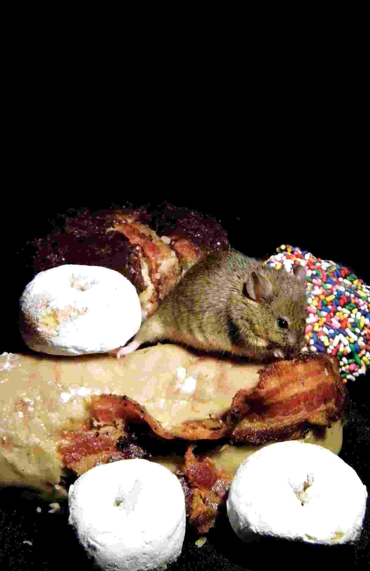26.set.2013 - Cientistas identificaram um circuito cerebral da compulsão alimentar após observações de neurônios de camundongos que atuam no hipotálamo lateral, região responsável por controlar impulsos. Esse circuito fazia as cobaias continuarem a comer mesmo depois de alimentadas, assim como levava os animais a recusarem comida quando famintos - Dakota Rose/Science