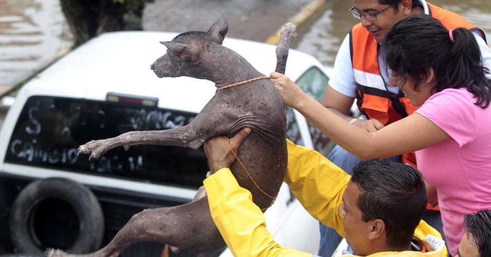 26.set.2013 - Equipe de resgate salva cachorro em rua alagada em Acapulco, no México. Escolas foram fechadas e dezenas de moradores foram evacuados depois que fortes chuvas causaram novas inundações no local