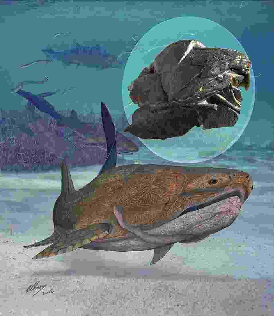 """26.set.2013 - Um fóssil de 419 milhões de anos (acima, em destaque) achado na represa de Xiaoxiang, na China, é do vertebrado mais primitivo a ter uma mandíbula moderna, incluindo o osso da arcada dentária, revela equipe de paleontólogos. Com forte carapaça, o """"Entelognathus primordialis"""" (ilustração) era um peixe da extinta família dos placodermos, com um crânio complexo e pequeno e ossos na mandíbula - Brian Choo/Chinese Academy of Sciences/Nature/AFP"""