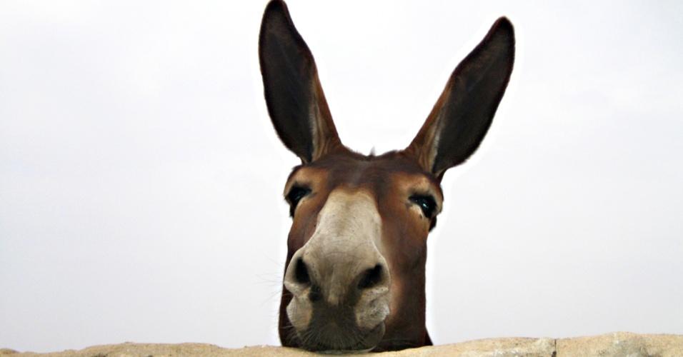 Rivalidades históricas, burro, mula, idiota, esteriótipo