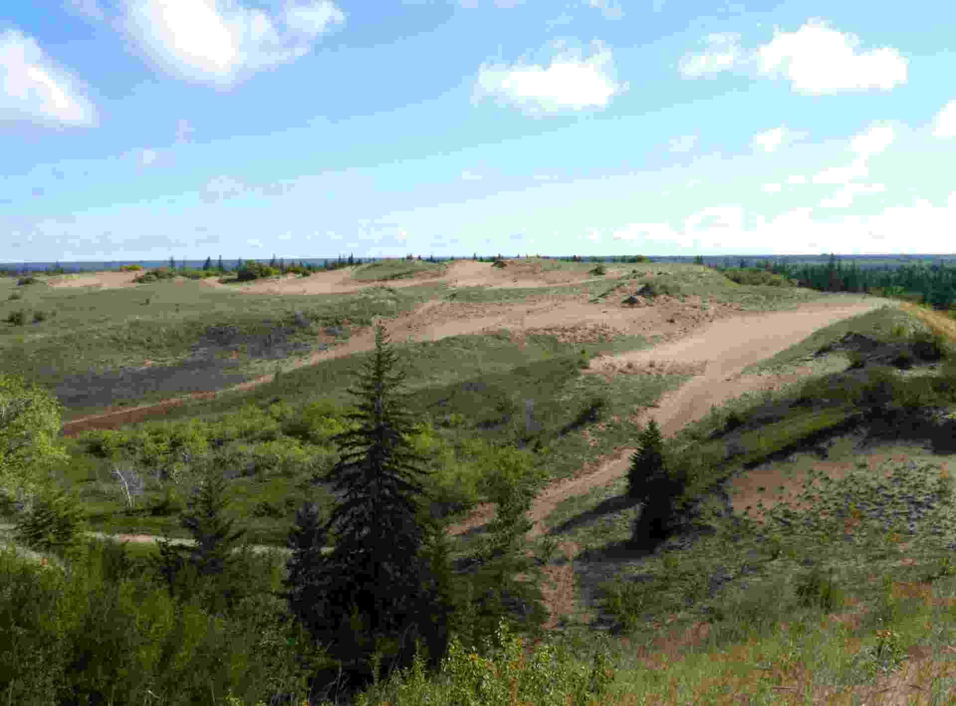 27.set.2013 - A região de Spirit Sands, um raro deserto de dunas localizado no parque da província de Spruce Woods, no Canadá, está desaparecendo gradualmente com o avanço da vegetação. As dunas, que são os últimos vestígios não vegetais que restam do delta do rio Assiniboine, se formou há 12 mil anos depois que uma geleira que cobria a área ter derretido - Thibault Jourdan/AFP