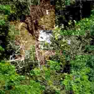30.set.2006 - Imagem aérea dos destroços no local onde caiu o Boeing 737-800 da Gol, em uma fazenda em Peixoto Azevedo (MT). Em 29 de setembro de 2006, o Boeing, que fazia o voo 1907, e um jato executivo Legacy-600 da Embraer (Empresa Brasileira de Aeronáutica), comprado pela empresa norte-americana ExcelAire, chocaram-se no ar. O Boeing caiu na floresta, matando todos os 154 tripulantes que estavam a bordo, e o jato conseguiu pousar sem nenhum ocupante ferido. Os destroços do avião foram encontrados no dia seguinte na terra indígena Capoto-Jarinã, em Peixoto de Azevedo (741 km de Cuiabá). O acidente completa sete anos neste domingo (29) - Força Aérea Brasileira/Divulgação