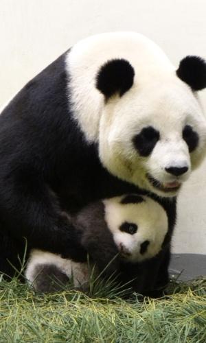"""28.set.2013 - A panda gigante """"Yuan Yuan"""" 'abraça' filhote nascido através de inseminação artificial no zoológico de Taiwan (Taipei)"""