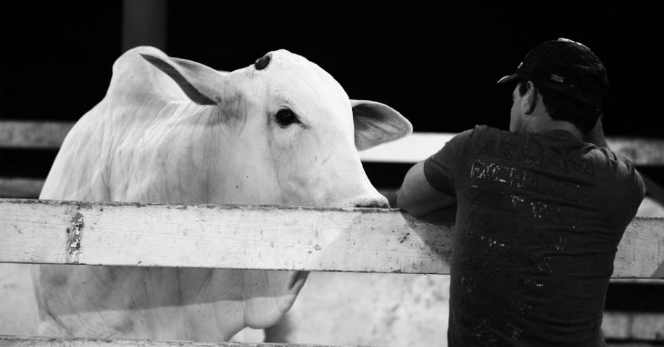 O gado da raça nelore é o mais comum no Brasil. Zezé Di Camargo resolveu investir nos animal de pura origem para agregar valor ao gado e, com isso, obter mais lucro na fazenda