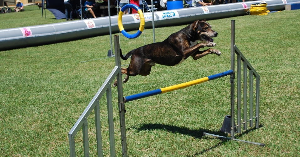 Fazenda na região de Itu (interior de São Paulo) foi local de torneio de agility, prova de destreza canina, em várias categorias neste domingo