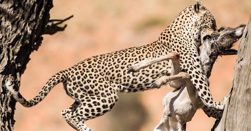 7.out.2013 - Leopardo pula em um ataque mortal a um gnu no Parque Kgalagadi, na África do Sul - o registro feito em dezembro de 2012 venceu um concurso de fotos de vida selvagem na Inglaterra