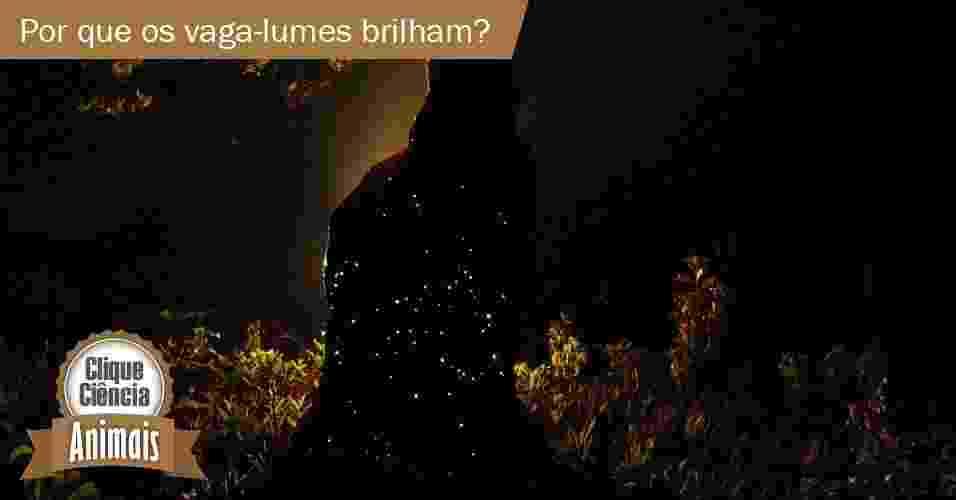 8.out.2013 - clique ciência- Como o vaga-lume emite a sua luz? Para que ela serve? - Mamede, 2007/UOL