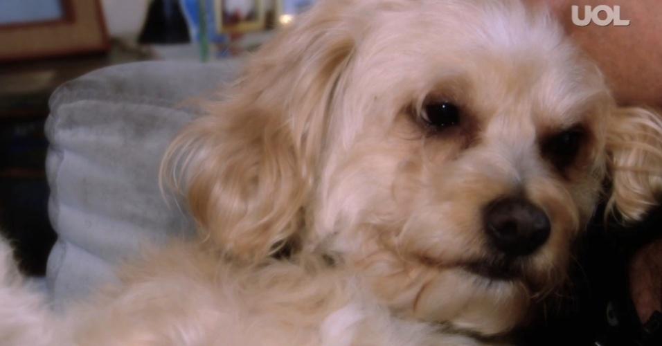 Site reúne dados de cães desaparecidos em São Paulo para facilitar busca -  Brasil - BOL Notícias e300a4c3118