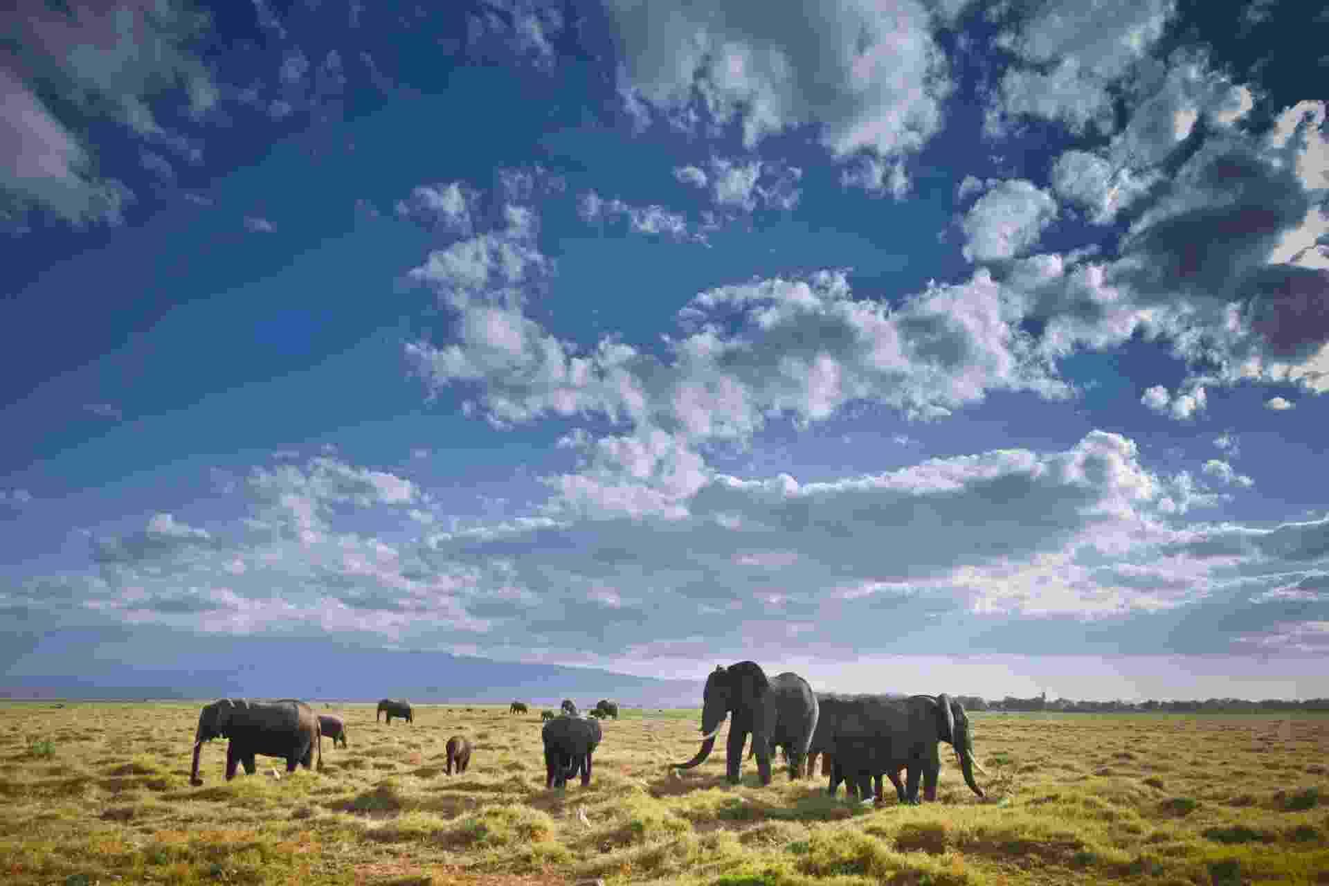 9.out.2013 - Serviço de Vida Selvagem do Quênia (KWS, na sigla em inglês) começou a fazer uma contagem aérea de elefantes e outros mamíferos de grande porte que vivem no Parque Nacional de Amboseli, a oeste do Monte Kilimanjaro, e às margens dos lagos Natron e Magadi. Junto com órgãos da Tanzânia e ONGs sediadas na África, o intuito da agência queniana é estabelecer a quantidade da população desses animais para ajudar as autoridades a elaborarem políticas para o cuidado e a gestão do ecossistema - Dai Kurokawa/Efe