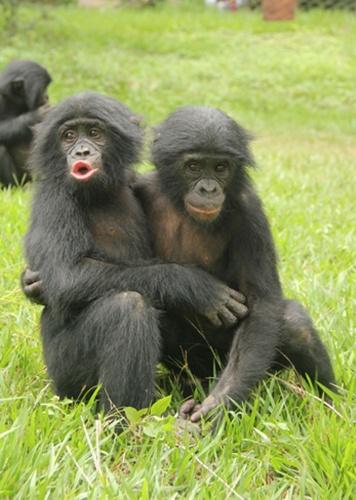 Resultado de imagem para Animal Social- imagens