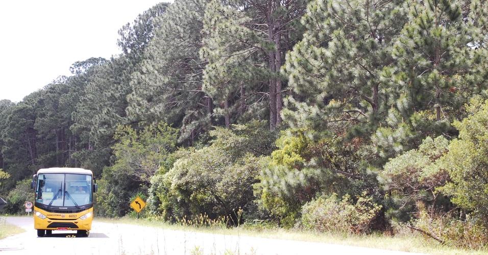 14.out.2013 - Os pinheiros do Parque Estadual do Rio Vermelho, em Florianópolis (SC), serão derrubados para a volta de espécies nativas