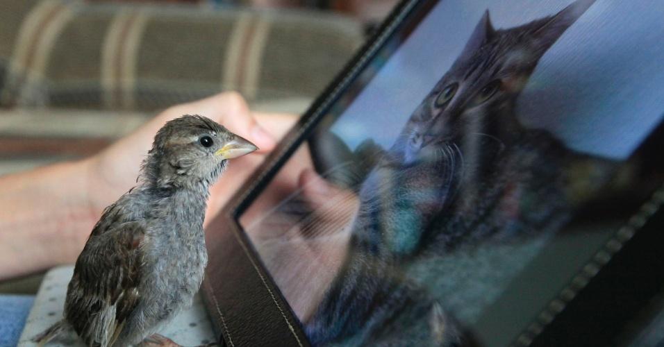22.ago.2013 - Pássaro observa imagem de gato em um tablet em Minusinsk, na Rússia