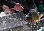 Biologia: Peixes - David W Cerny/Reuters