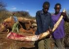 Cães farejadores unem-se à guerra contra caçadores de elefantes na África - Brent Stirton/Wildlife Photographer of the Year 2013