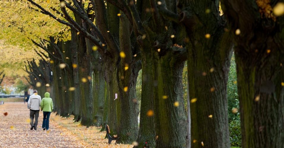 17.out.2013 - Folhas coloridas caem de árvores em um parque em Hannover, na região central da Alemanha