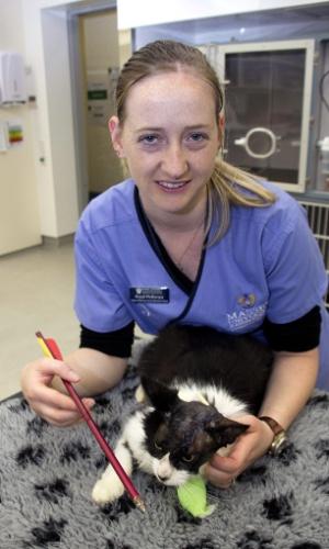 23.out.2013 - A enfermeira veterinária Anjuli McKenzie mostra o gato Moo Moo e a flecha que lhe atravessou a cabeça, depois da cirurgia para a remoção do objeto, nesta terça-feira (22), em Palmerston North (Nova Zelândia). Moo Moo sobreviveu depois de um projétil disparado com uma arma besta atravessar sua cabeça, sem atingir, no entanto, o cérebro
