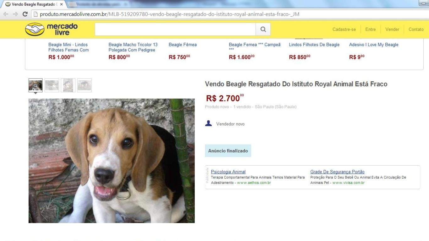 Beagle vendido por R  2.700 na internet era do Instituto Royal 97f0163242a69
