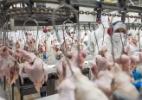 Abate de bovinos, porcos e aves é recorde pelo 2º ano consecutivo, diz IBGE - Rodrigo Capote/UOL