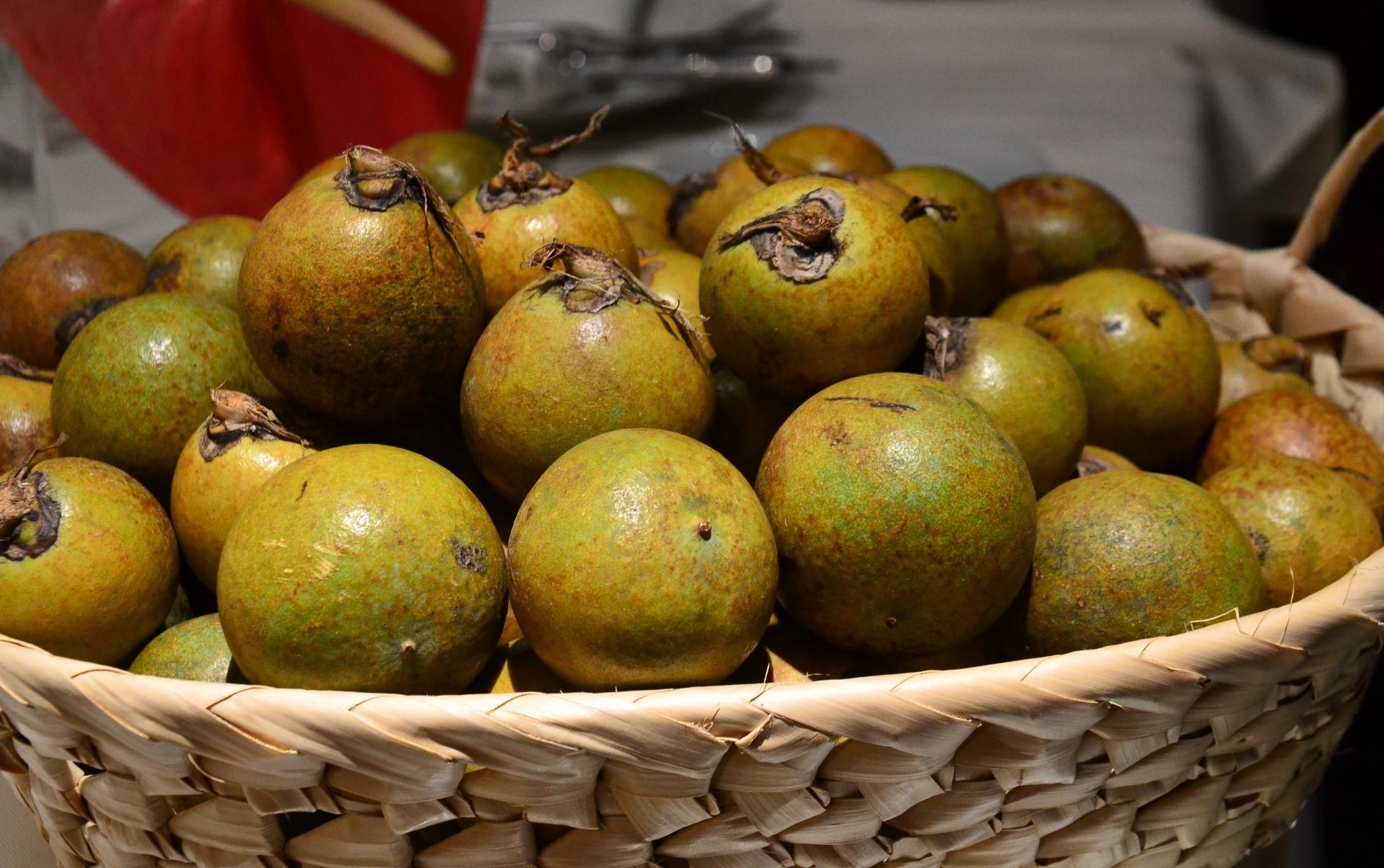 Fotos: Fruta do cerrado, macaúba se transforma em pratos salgados ...