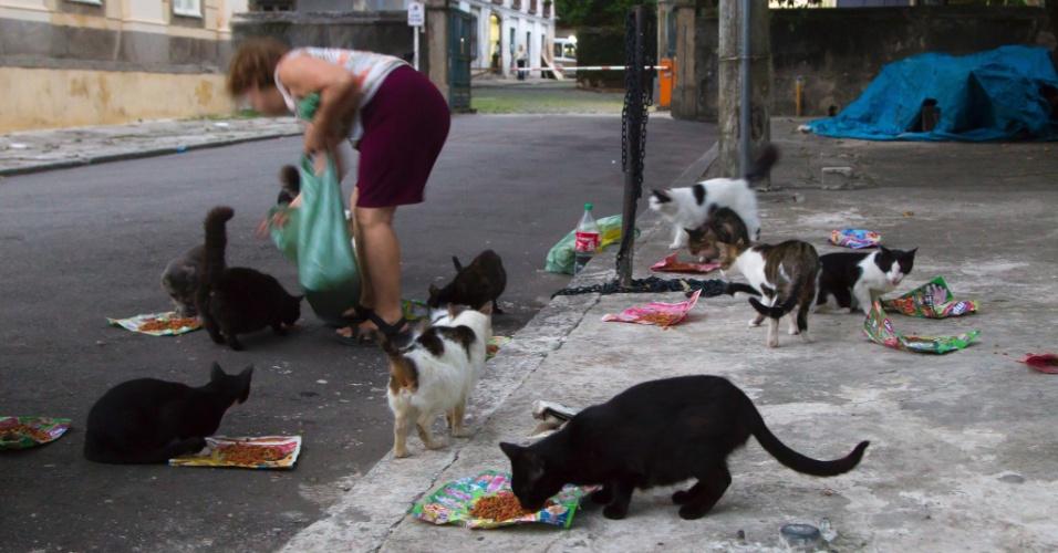 31.out.2013 - Mulher alimenta gatos em rua na Quinta da Boa Vista, no Rio de Janeiro, nesta quinta-feira (31)