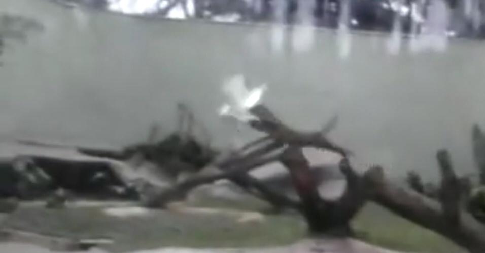 """1.nov.2013- Era só uma visita normal ao zoológico de São Paulo quando uma onça atacou uma garça que voava por seu recinto. Em um só pulo a onça pegou a ave no ar. Depois de alguns minutos de """"luta"""", a garça morre"""