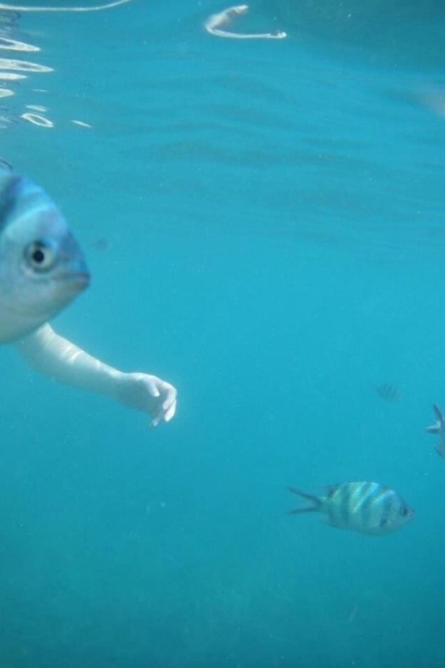 5.nov.2013 - Peixes não têm braços!