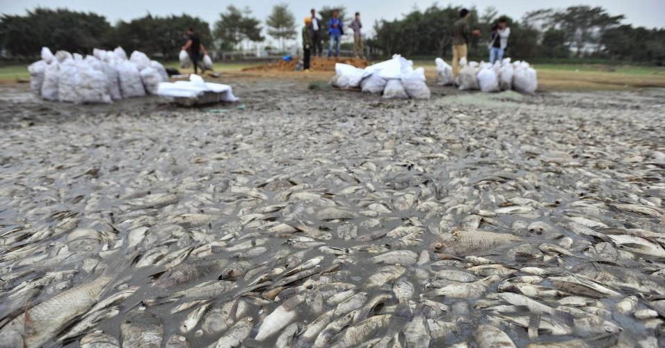 5.nov.2013 - Trabalhadores coletam peixes mortos em parque em Shenzhen, na província de Guangdong, na China. Mais de 10 mil peixes foram encontrados mortos em um lago dentro do parque, depois que esgoto foi despejado no local