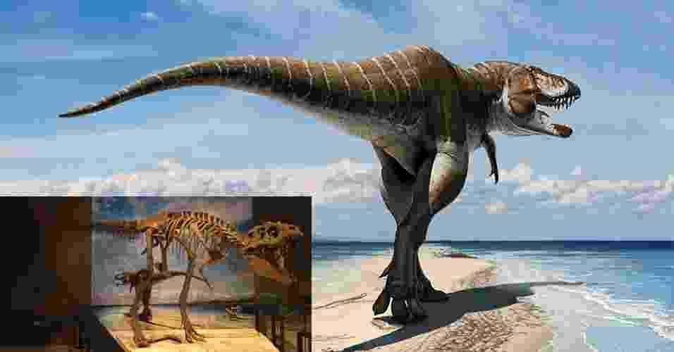 6.nov.2013 - Uma nova espécie de tiranossauro foi descoberta em Utah, centro-sul dos Estados Unidos. Os ossos de seu crânio revelaram uma fera de 80 milhões de anos dele que é o primo mais velho conhecido até agora do lendário T. rex - Divulgação/Universidade de Utah