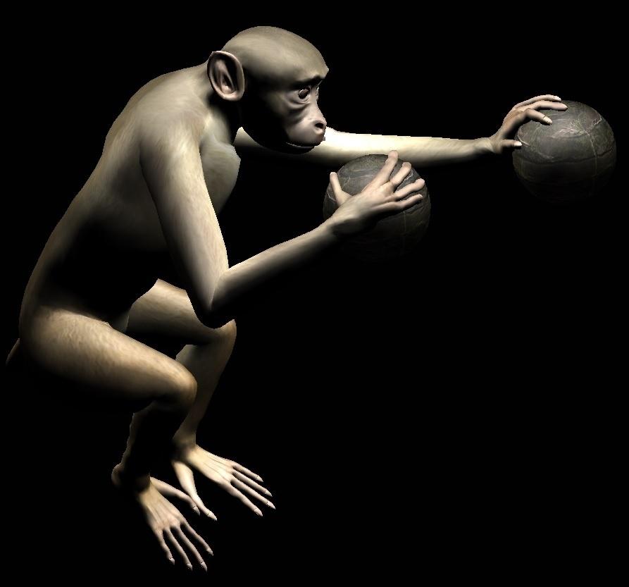 6.nov.2013- Dois macacos aprenderam a controlar movimentos de ambos os braços de um corpo virtual usando apenas a atividade elétrica do cérebro. A descoberta foi publicada hoje (6) na revista Science Translational e faz parte de estudo conduzido pelo laboratório do pesquisador brasileiro Miguel Nicolelis