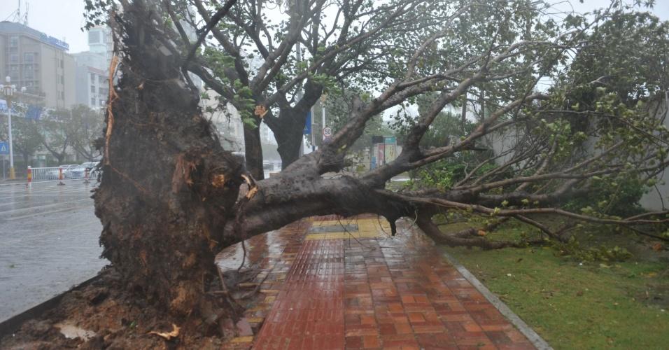 10.nov.2013 -  Árvore cai devido aos fortes ventos causados com a aproximação do tufão Haiyan, da cidade de Sanya, no sul da província chinesa de Hainan
