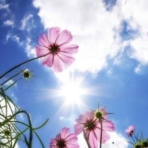 Fotos Capas De Flores Para Facebook Deixam Seu Perfil