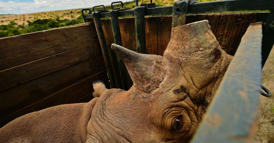 Novembro - Um rinoceronte negro chamado Sero foi capturado no parque Lewa, no Quênia. Onze dos 73 rinocerontes do parque de conservação foram realocados para o parque Borana, que tem mais espaço. Eles tiveram seus chifres cortados e foram instalados aplicativos para rastreá-los e ajudar a prevenir a caça. Lewa já sofreu no passado com uma severa caça ilegal, onde os caçadores matam os rinocerontes para vender o chifre que é valioso para a medicina chinesa