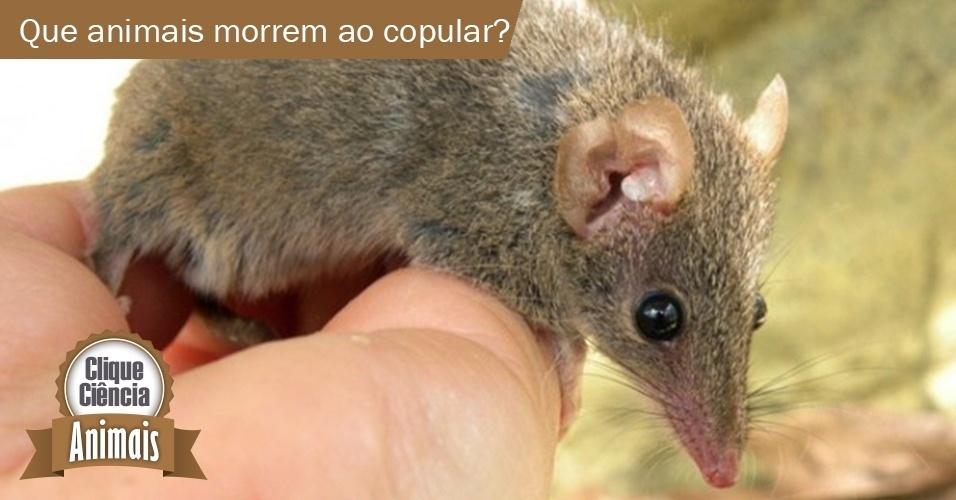 3.dez.2013 - Clique Ciência: Que animais morrem após copular?