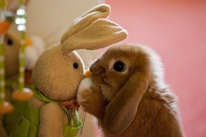04.dez.2013 - O coelhinho gostou da ideia e também arrumou um amigo para conversar