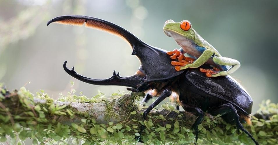 4.dez.2013 - Foto mostra o vínculo inesperado entre um pequeno sapo e um enorme besouro. A imagem foi capturada por Nicolas Reusens Boden, da Suécia, um fotógrafo amador,  e participa do concurso de fotografia da Sony World Photography Awards 2014