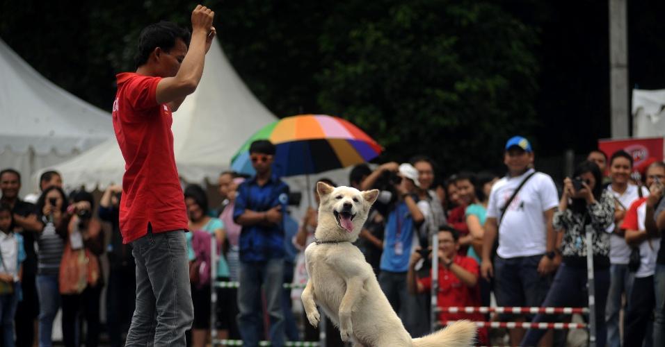 15.dez.2013 - Cachorro participa de apresentação na cidade de Jakarta, na Indonésia. Durante o evento, amantes de cachorros dividem seus conhecimentos sobre adestramento e dicas de bem-estar para cuidar dos cães