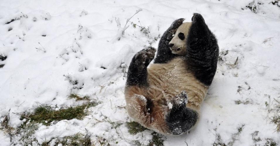17.dez.2013 - Panda gigante rola na neve em zoológico de Kunming, China