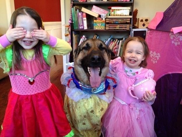 18.dez.2013 - Esse cão parece bem à vontade fantasiado de princesa, tudo para entrar na brincadeira das suas donas