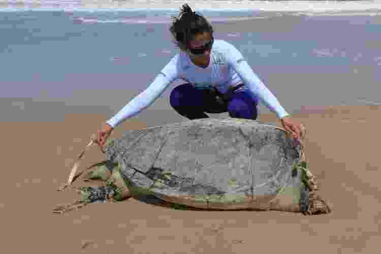 18.dez.2013 -Técnicos do Biomade coletaram dados de 13 tartarugas mortas, encontradas entre os Estados do Maranhão e Piauí, no sábado (14) - Divulgação / Biomade