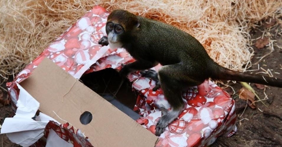 19.dez.2013 - Macaco recebe doces de presente de Natal em zoológico Darwineum, em Rostock, norte da Alemanha