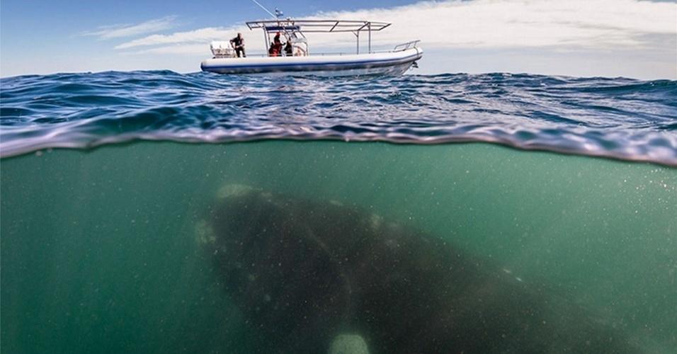 19.dez.2013- Turistas faziam um passeio na costa argentina quando foram surpreendidos por uma baleia gigante de 50 toneladas sob seu pequeno barco, perto da Península Valdés. As baleias costumam ir para as águas mais quentes da região nesta época do ano para criar seus filhotes