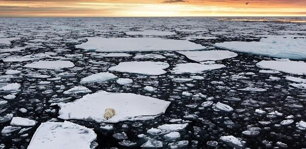 Urso polar é fotografado enquanto espera para caçar focas em pedaço de gelo no meio do Oceano Ártico - Reprodução Daily Mail
