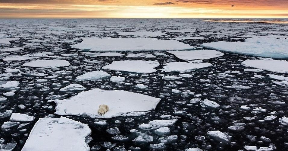 20.dez.2013 - Urso polar é fotografado enquanto espera para caçar focas em pedaço de gelo no meio do Oceano Ártico. Em outubro, a região atinge a menor extensão de gelo no ano e os ursos devem se manter próximos da fronteira norte. Neste ano, a menor extensão de gelo foi 50% maior do que em 2012. A foto foi tirada pelo pesquisador acadêmico italiano Marco Gaiotto, que estava a bordo de um navio no arquipélago de Svalbard, na Noruega