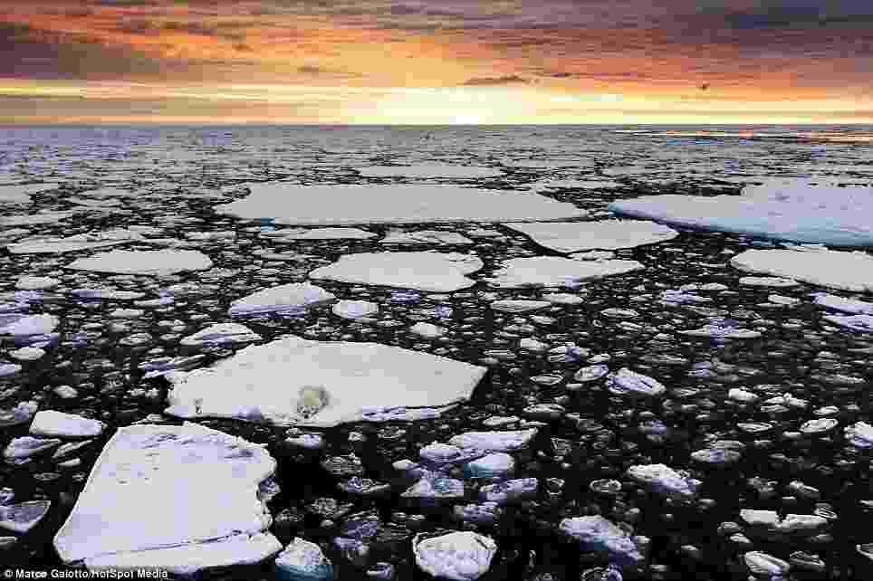 20.dez.2013 - Urso polar é fotografado enquanto espera para caçar focas em pedaço de gelo no meio do Oceano Ártico. Em outubro, a região atinge a menor extensão de gelo no ano e os ursos devem se manter próximos da fronteira norte. Neste ano, a menor extensão de gelo foi 50% maior do que em 2012. A foto foi tirada pelo pesquisador acadêmico italiano Marco Gaiotto, que estava a bordo de um navio no arquipélago de Svalbard, na Noruega - Reprodução Daily Mail