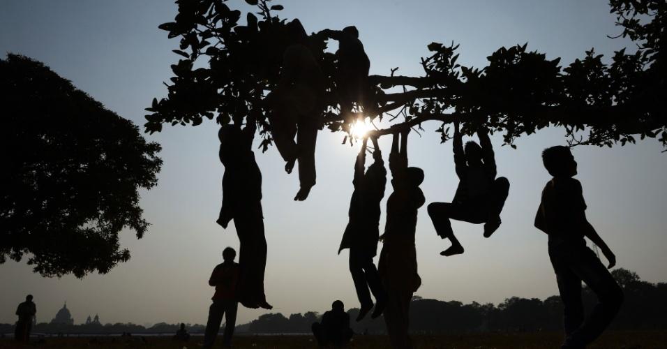 2.jan.2014 - Crianças indianas se penduram em uma arvore em Kolkata, na área de Maidan, nesta quinta-feira (2). O Maidan (ou campo aberto) é o maior parque urbano em Kolkata e é conhecido como os pulmões da cidade, com uma área superior a mil hectares