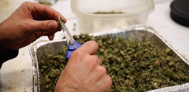 Centro de cultivo de maconha em Denver, onde a erva é legalizada desde 2013