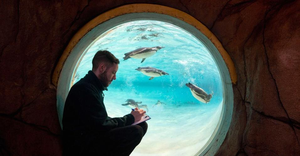 2.jan.2014 - Um funcionário do zoológico conta os pinguins durante inventário anual no zoológico de Londres, no Reino Unido, nesta quinta-feira (2). A contagem é obrigatória e gera dados que são compartilhados por zoológicos ao redor do mundo, usados para o gerenciamento e melhoramento de programas focados em animais em risco de extinção