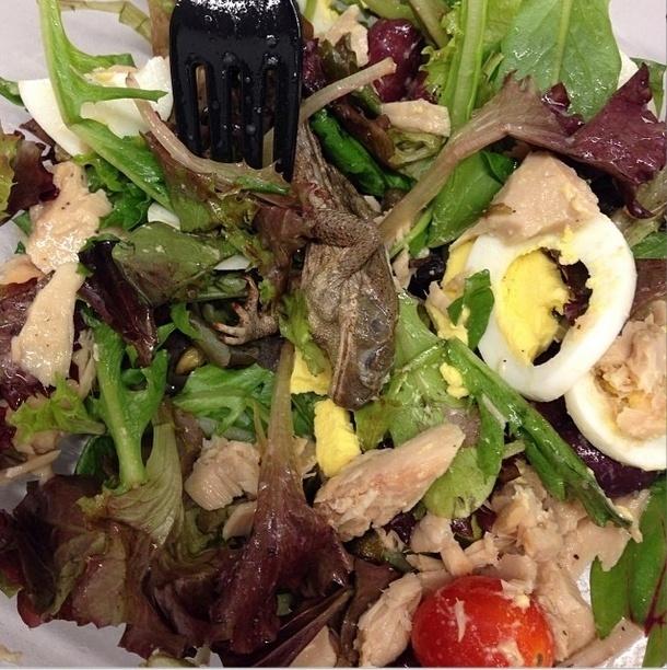 2.jan.2014 - Um sapo morto foi encontrado dentro de uma salada no restaurante Pret A Manger de Nova York (EUA). A cliente era colega da jornalista Kathryn Lurie, que trabalha no Wall Street Journal e publicou a foto do prato em sua conta no Instagram, no dia 30 de dezembro